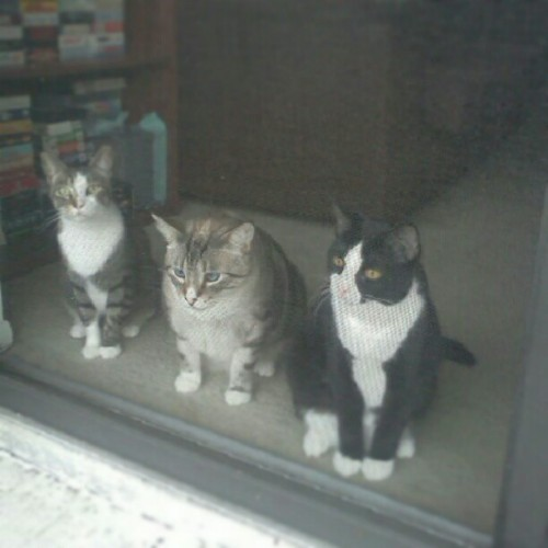 fuckyeahfelines:  From L-R Caliber, Mauzer, and Trigger. They love watching everyone outside their apartment.