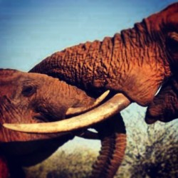 #elephants meet #instagram
