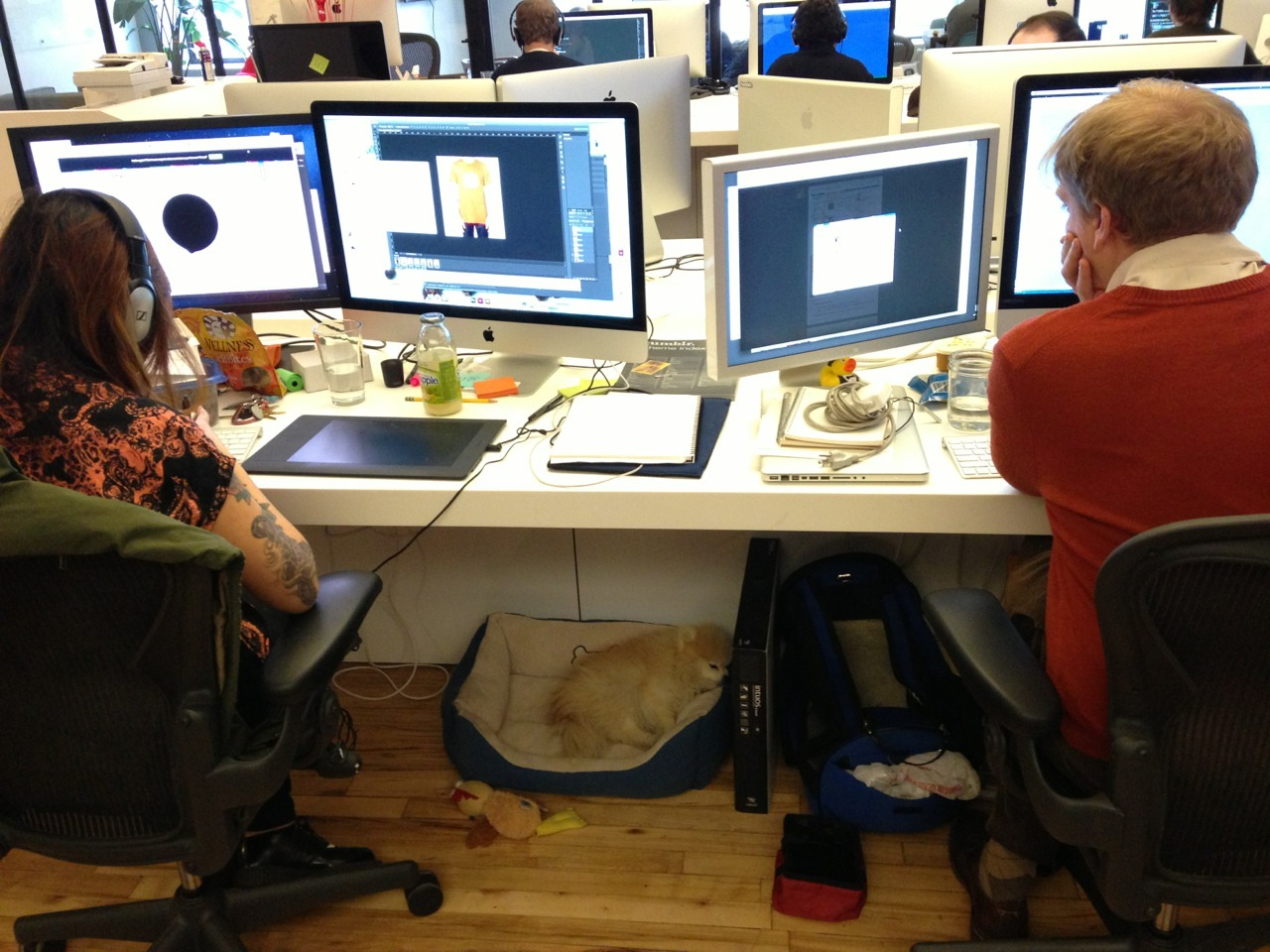 Sleeping on the job at Tumblr HQ.