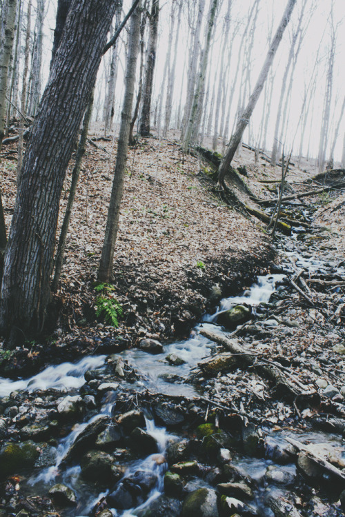 3th0s:   (by Emily Boyer Photography)