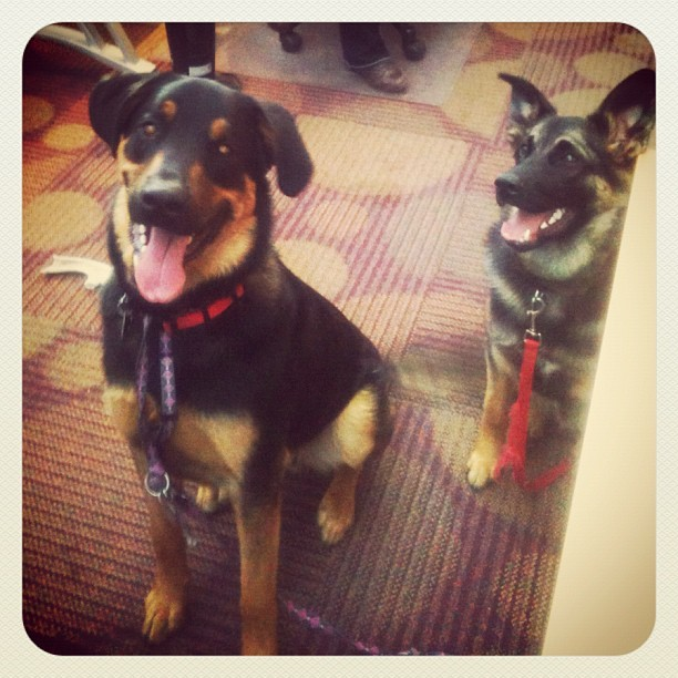 It was #puppyday in the office. Yaaaaaaaay!