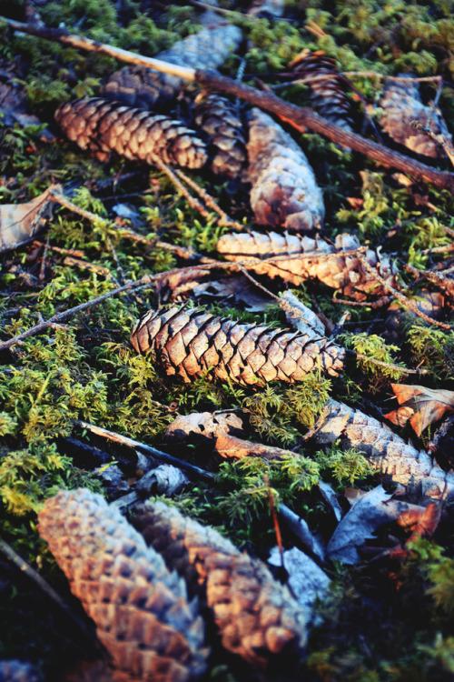 nature morning light moss cone photographers on tumblr