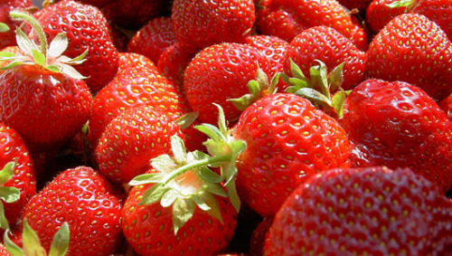 Bland strawberries may get a genetic flavor upgrade      Researchers will breed strawberries conventionally for flavor instead of genetically engineering.