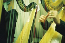 visualfuckerr:  Harp Filosa