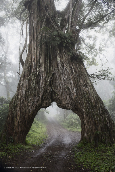 bluepueblo:  Into the Mystic, Arusha National Park, Tanzania photo via pixie