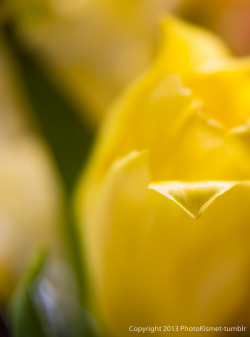 Tip of the tulip