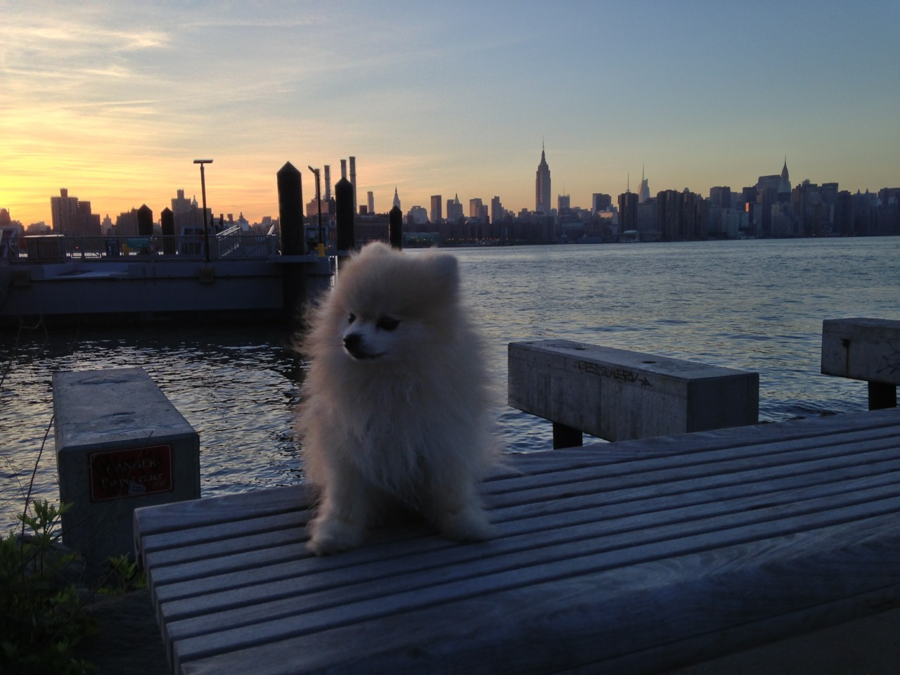 New York I love you, but I'm a pom.