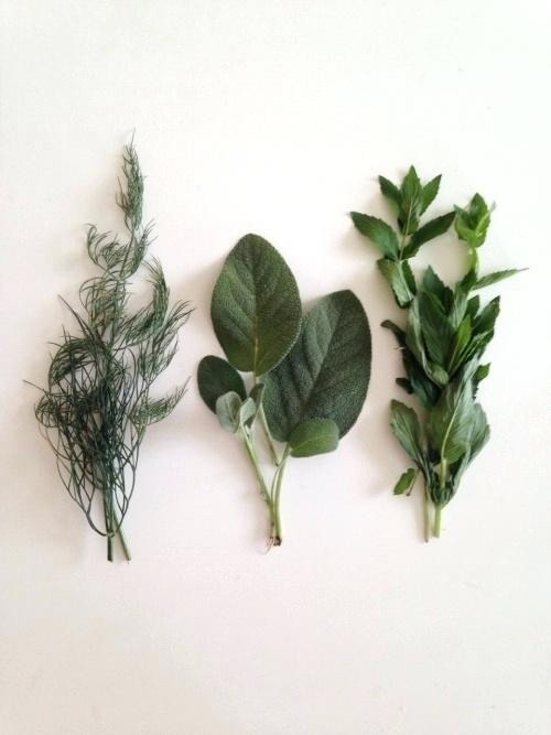 green green blog nature blog herbs witch witchy nature witch nature nature theme earth earthy boho hipster green theme nature aesthetic green aesthetic herb aesthetic woods mountains