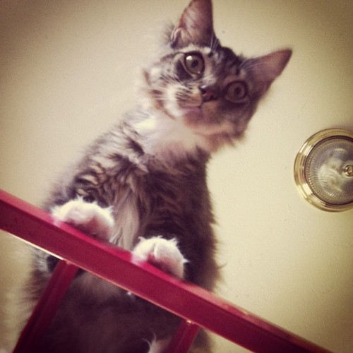 Adventure kitty #gatsby #thegreatcatsby #heights #kitty #cat