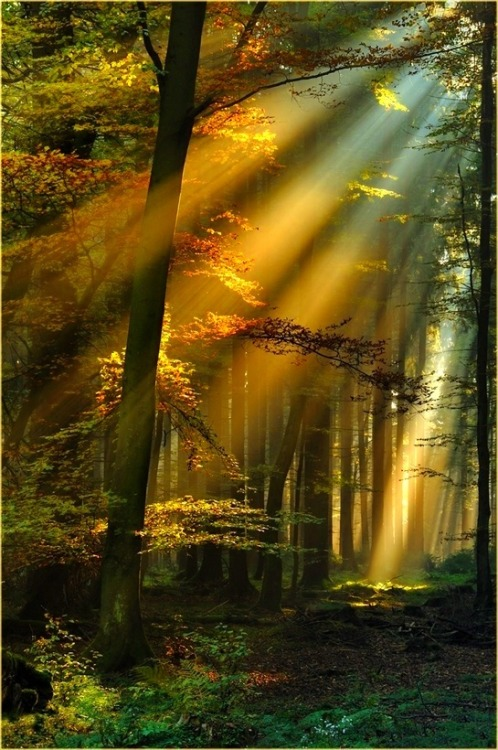 bluepueblo:  Golden Sun Rays, Schwarzwald, Germany photo via bernell