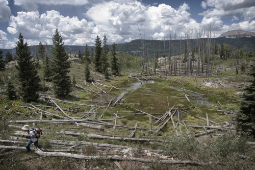 "WEMINUCHE WILDERNESS    ""Thousands of tired, nerve-shaken, over-civilized people are beginning to find out that going to the mountains is going home; that wildness is a necessity….""-John Muir Tucked away in the mountains of the San Juan and Rio Grande national forests in southwest Colorado is the Weminuche Wilderness, the state's largest wilderness area. The Weminuche was officially designated as a protected wilderness in 1975, under the 1964 Wilderness Act's National Wilderness Preservation System.  It was added to in 1980 and again in 1993. At just under 500,000 acres (the entire state of Rhode Island is 776,957 acres by comparison) the Weminuche Wilderness is a rugged and nearly roadless expanse of untamed mountains and forest crisscrossed by nearly 500 miles of trails and 63 cirque lakes. The Colorado Trail crosses for 21 miles on its way to Denver, and the world famous Continental Divide Trail runs through the Weminuche for almost 80 miles of its 3,100 mile run between Mexico and Canada. Of the 53 'fourteeners' (mountains 14,000 feet or above) in Colorado, three of them reside within the Weminuche Wilderness.  The average elevation for the area runs about 10,000 feet, making this area as difficult as it is scenic. Link: NWPS map     * * * At-Large Guide to the West JAMES ORNDORF was born in Minnesota, but knew at a very young age that the future lay out west. He is currently photographing and illustrating outside of Durango, Colorado. You can see what he's up to at inlandwest.tumblr.com and roughshelter.com."