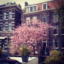 AMSTERDAM | Let's have a great summer 2013 all :) #blossom #goodlife ##
