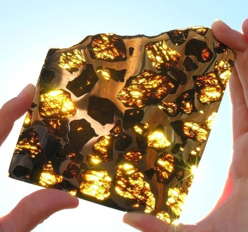 goldrave:  The Fukang Meteorite. This piece shows off the meteorite's characteristic large pieces of peridot ((Mg,Fe)2SiO4) suspended in a metallic nickel-iron matrix.