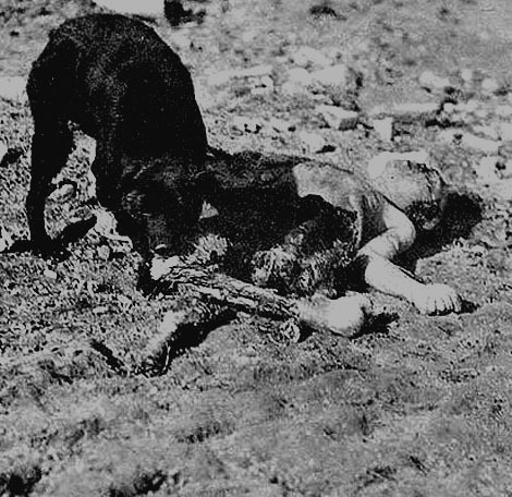 schlangekraft:  Dog devouring dead soldier.