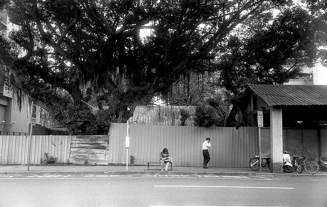 Big tree on Flickr.Zorki4 Jupiter12, Lucky SHD100@400