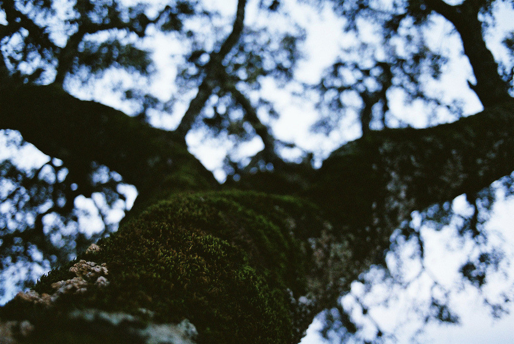 littlelifeofarealist:  Moss by desfoques. on Flickr