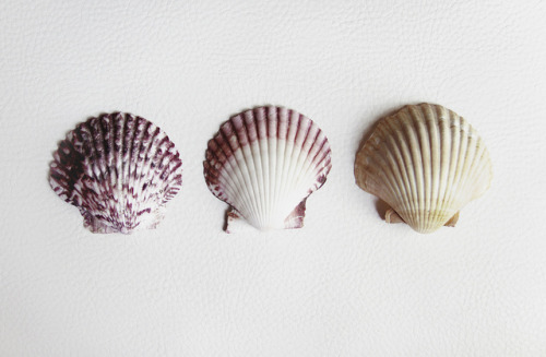 1nnocents:  shells by mlartigue on Flickr.