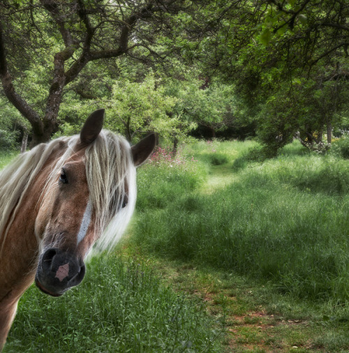 mostlycatsmostly:  (via Valentina Kulagina)  GOOD LOOKING HORSE BOMB