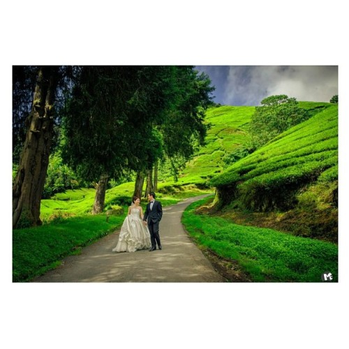 Pre-wedding at Cameron highland #wedding #love#prewedding#engagement#portraits#brides#groom#cameronhighlands#sky#greenary#couple#megallery4u#photographer#photoshoot#ig#iger#instadaily#instagood#classic#instaddict#people#vintage#artwork#art#canon#jj #squaready