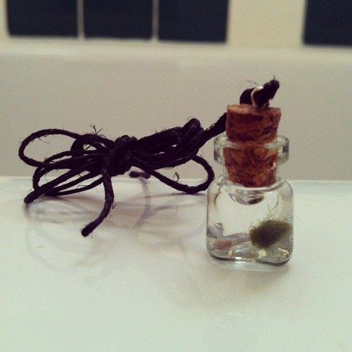 The cutest mini marimo necklace!!! #AearAranelhttps://www.etsy.com/shop/AearAranel