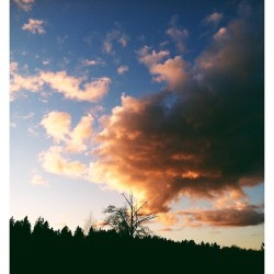 Beautiful! 😊 #iphoneography #beautiful #view #mercersloughnaturepark #clouds #cloudporn #nature #outdoors #orange #trees #sky #bellevue #instagood #instamood #vscocam