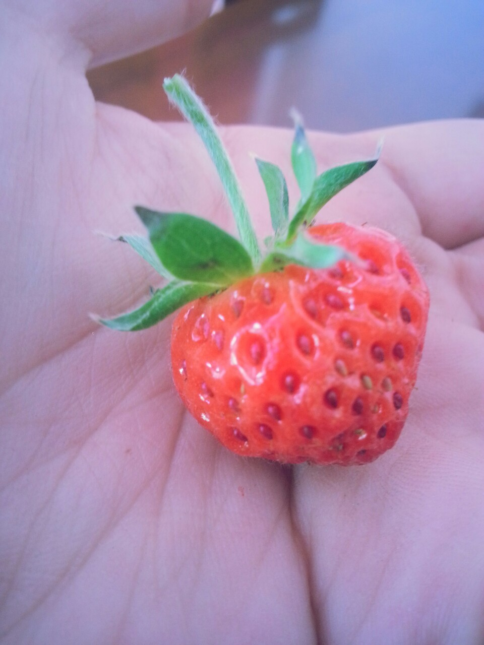 Self-grown strawberry