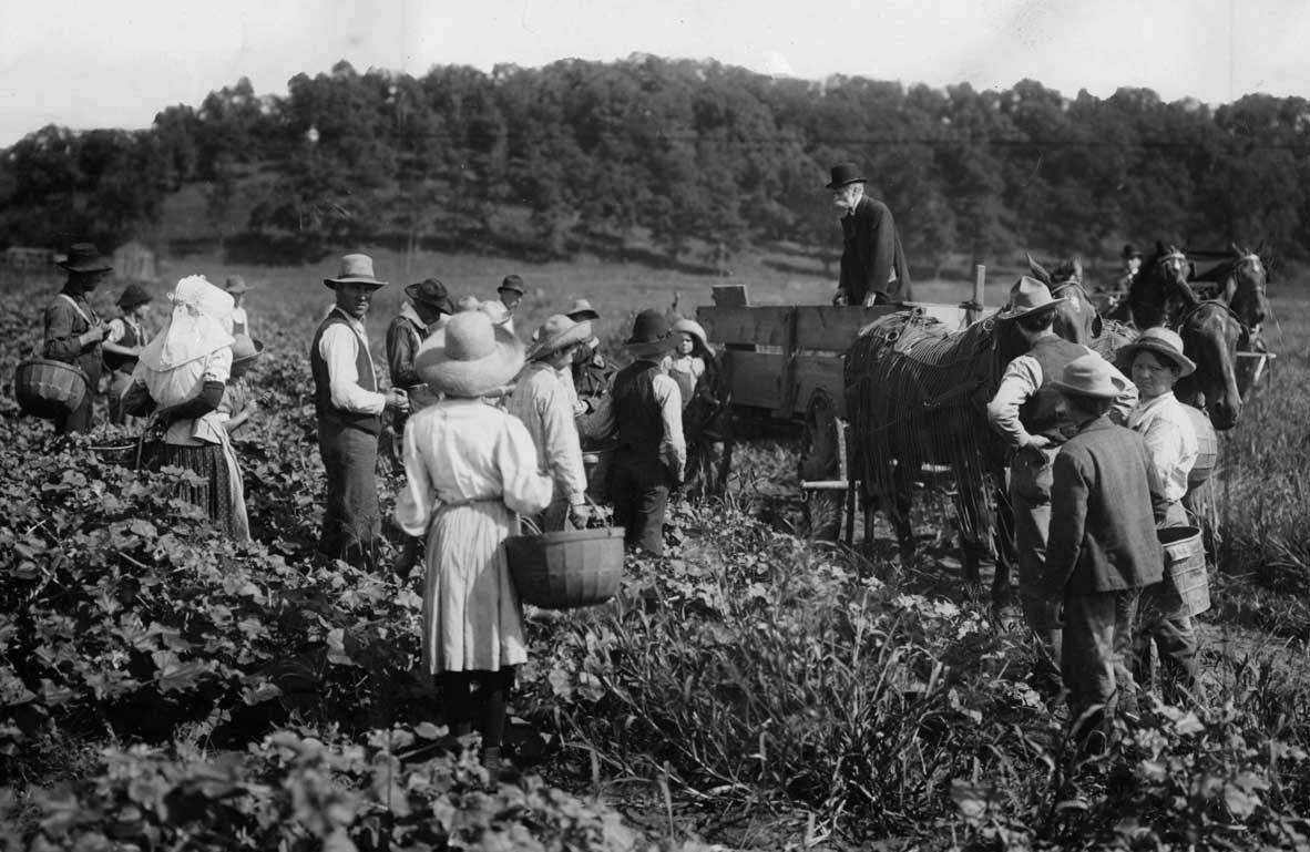 H.J. Heinz inspects  crops in 1907.