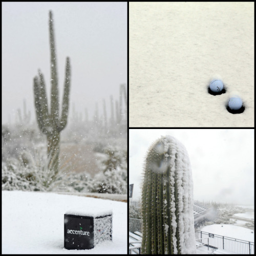 First round of the WGC-Accenture Match Play has been delayed because of snow in Arizona. Lots of snow - http://sbn.to/YGEtIQ (Photos by Jed Jacobsohn and Stuart Franklin/Getty Images)