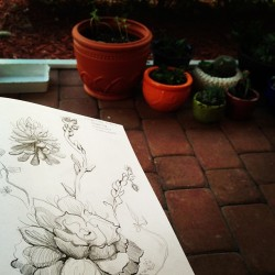 #Drawing in the micro-garden… Wishing that I hadn't left my dang watercolors elsewhere! Gimme some #color! #blackandwhite #doodles #sketchbook #plants #succulents