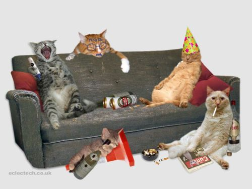 Is that Cat Party???
