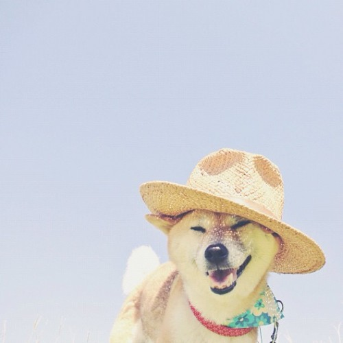 "drillbot:  a selection of my ""shibes in hats"" folder"