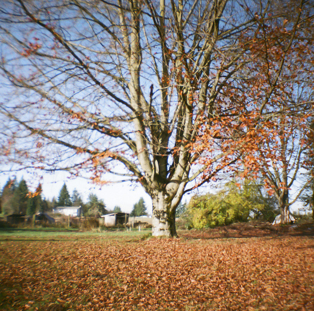 I'd forgive forever. That's just who I am. (Enumclaw, Wa — Diana Mini)
