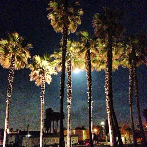 Hiding moon.  #moon #night #black #sky #green #palmtrees #palm #trees #iphone5 #iphone #i5 #imp #imperial #imperialbeach @sandiego_ca @sandiegophotos