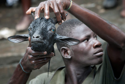 photo by: rafael fabres  Voodoo practitioners make take part in a ritual at the Plaine du Nord