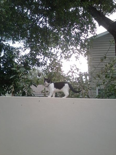 chaseandmason:  Mason crawled up on the wall so he could look in the neighbors yard. There was nothing interesting happening so he got back down.
