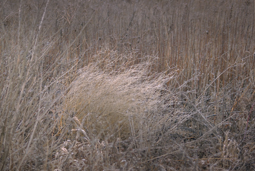 The prairie in january is a winter sail full of the torque of the air.