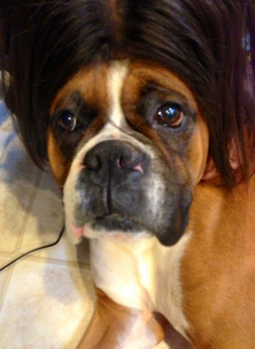 Rocky rocking a new doo.
