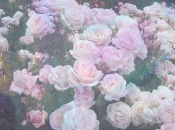 flowers pink pastel roses Romantic pale pale pink