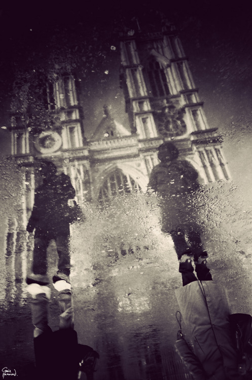 gavinhammond:  Westminster Abbey in a puddle. The light is not what it was last spring, but I couldn't help myself…   #sonice