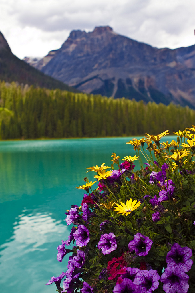 touchdisky:  Emerald Lake, British Columbia, Canada by AngeStar