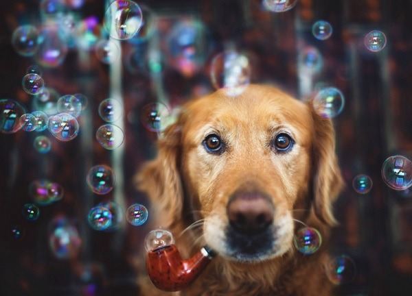 splendiforouslove:   Jessica Trinh Captures Beautiful Portraits Of Her Pet Dogs.  Made my day.