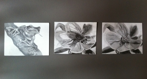 Sequence graphite illustration - 'Got my eye on the fly'