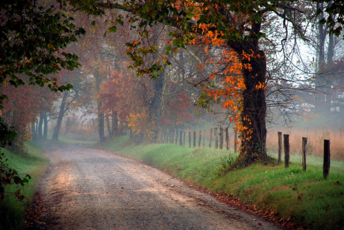 simplynorule:  Autumn Lane. (by BamaWester)