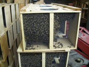 2013 Package BeesInformation on this years package bees are finally available.  Pickup Dates will be March 21st,…View Postshared via WordPress.com