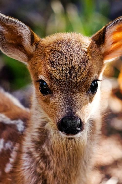 bambi cute baby animals fawn baby deer forest animals