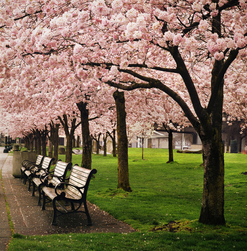 travelthisworld:  Almost Time - Portland, Oregon | by manyfires