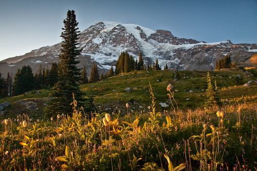 hauntingreveries:  Mt Rainier Alpine Meadow by cooler than h2o on Flickr.