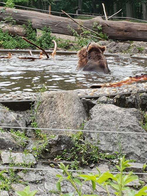 bear zoo straubing bavaria
