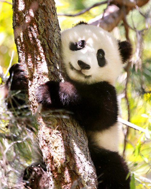 burning-soul:  MR. WU by WisteriaLane on Flickr.