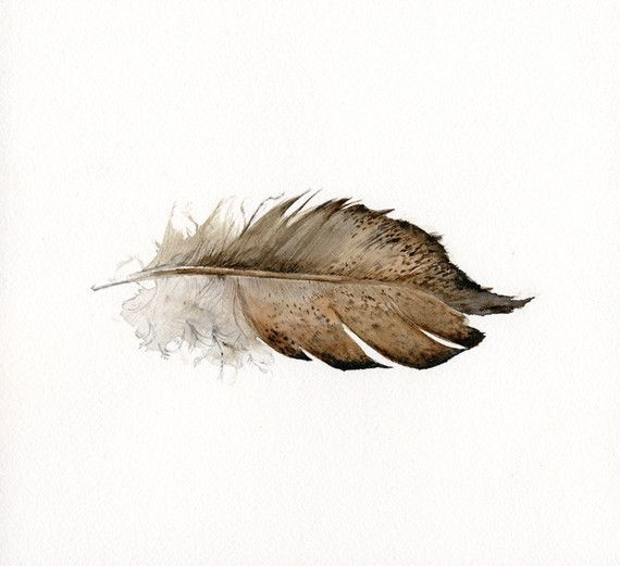 showslow:  Amber Alexander, Watercolor Feathers